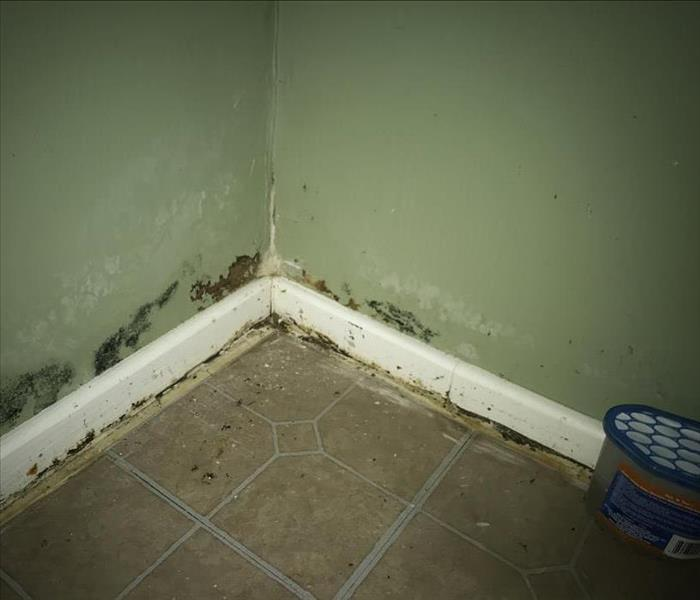 Mold Growth in Catawba Home