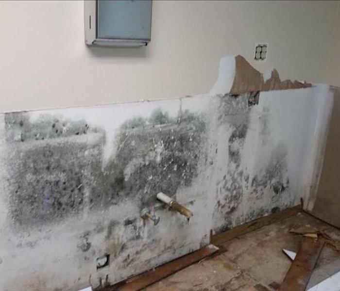 Mold Damage – Conover Office Lunchroom