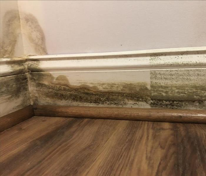 Black and brown mold growing on white baseboard