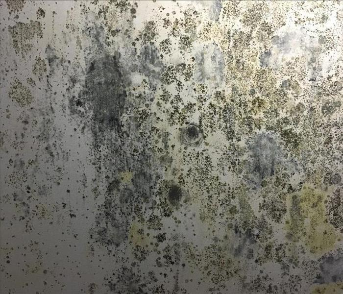 Commercial Common Sources of Mold Growth in Conover-area Businesses