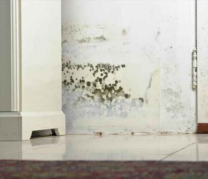 Mold Remediation Mold Damage Remediation in Your Conover Home