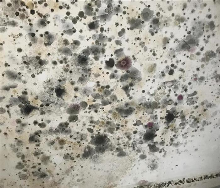 Mold Remediation What is This Mold?